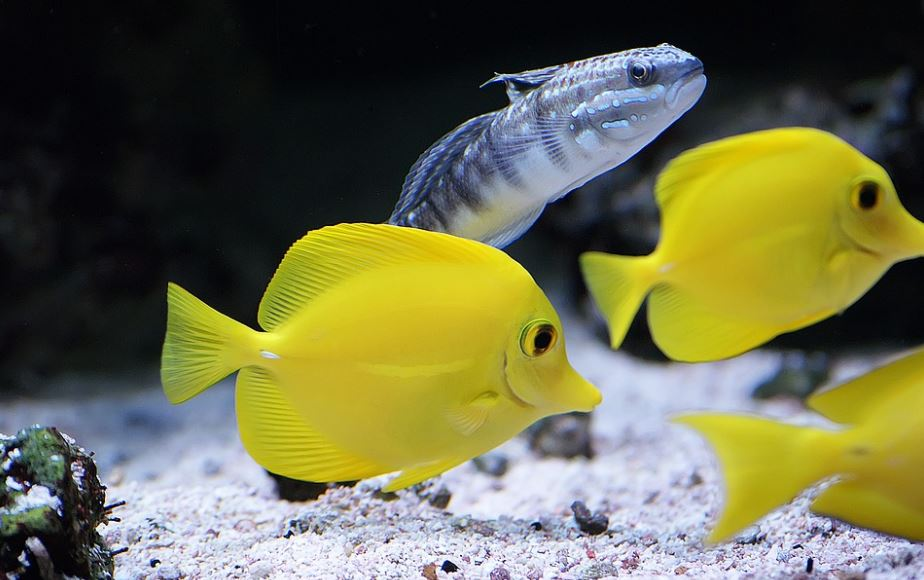 how to care for tropical fish, easy fish tank care and maintenance tips for beginners, how to care for aquarium fish