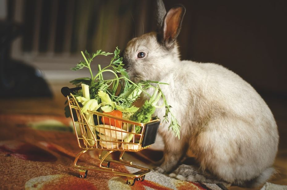 diets for pet rabbits, toxic foods for rabbits, foods for rabbits, rabbit food, food for pet rabbits, rabbit's safe food, food a rabbit can eat, good foods for rabbits,