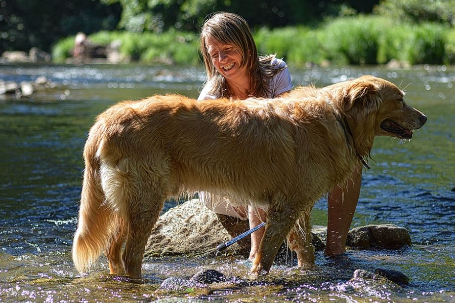 Grooming tips for pets, Pets