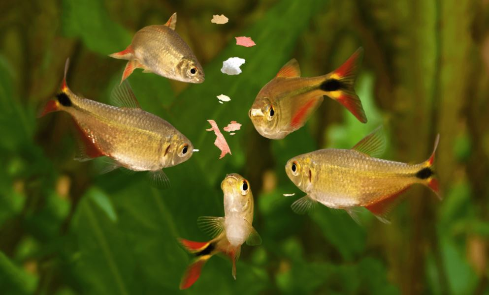 type of fish food, what kind of fish food do bettas eat, types of fish food, how much fish food, types of seafood fish