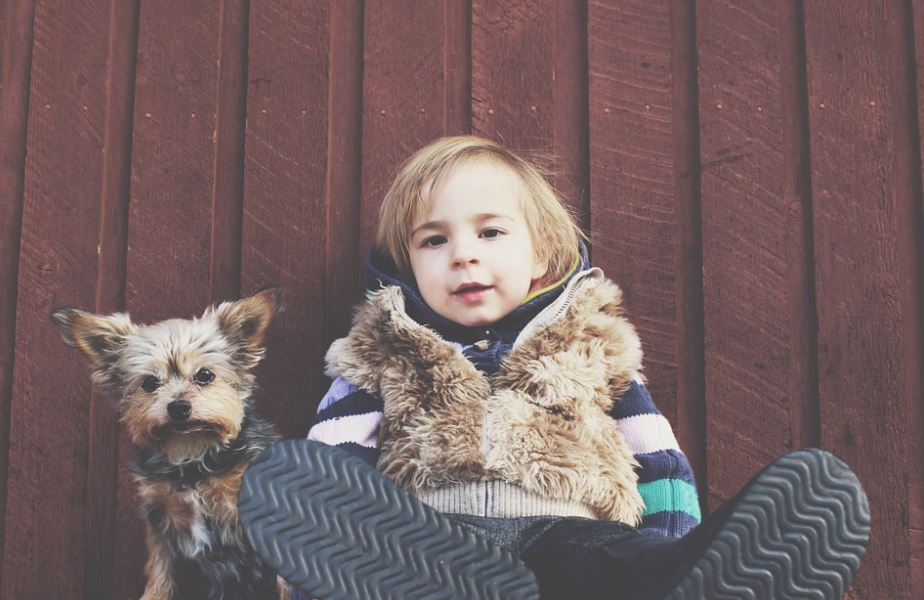 top 10 most kid-friendly dog breeds, top 10 most child-friendly dog breeds, famous child-friendly dog breeds, Popular kid-friendly dog breeds, popular child-friendly dog breeds