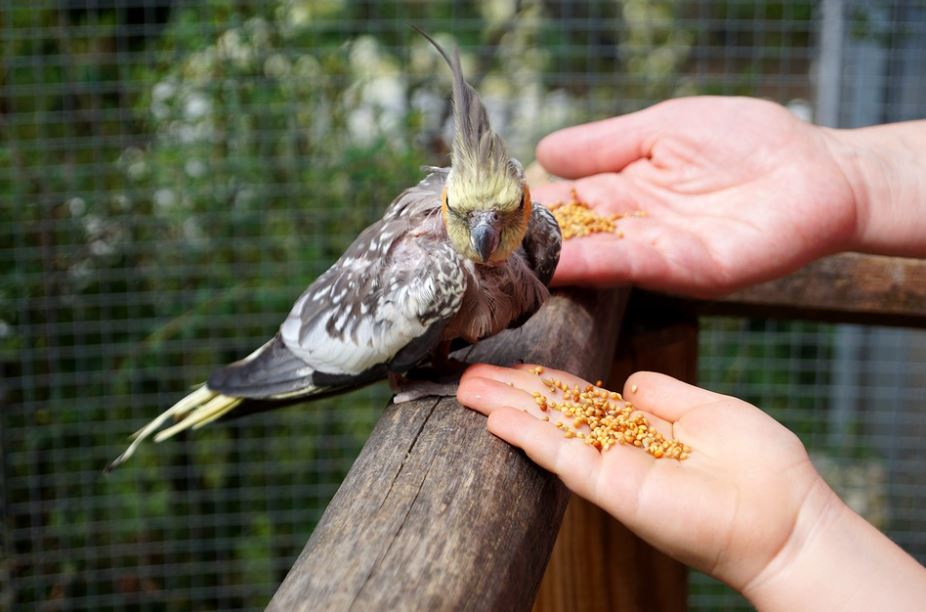 foods that are toxic to birds, foods toxic to pet birds, foods that arere poisonous to birds, foods to avoid feeding birds, don't feed your pet bird these foods, foods you should never feed your pet bird