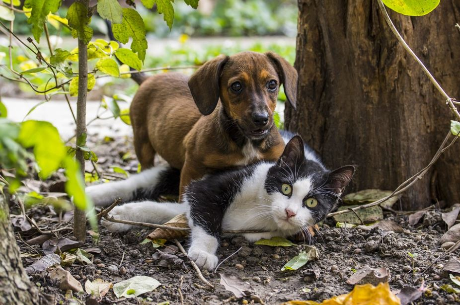 cats vs dogs: which is better, why cats are better than dogs, reasons why cats are better than dogs, cats are better than dogs debate, scientific facts why cats are better than dogs