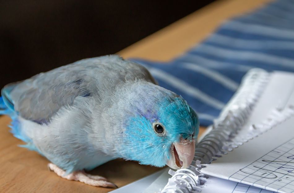 top 5 facts about birds, interesting facts about pet birds, amazing facts about pet birds, interesting facts of parrot, top 10 facts about pet birds