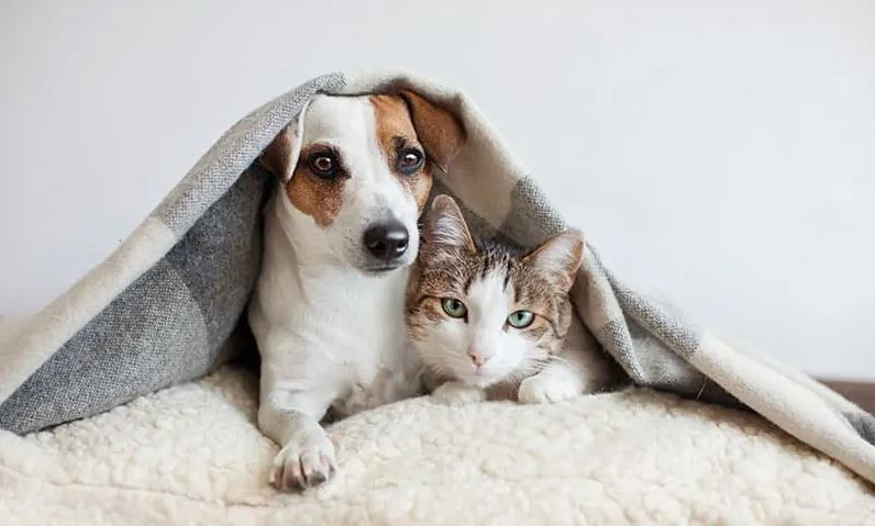 How do you take care of your pets during the winter season, how to keep the pet warm in winter, pets caring tips in winter, how to protect pets from cold weather, pet care tips in winter