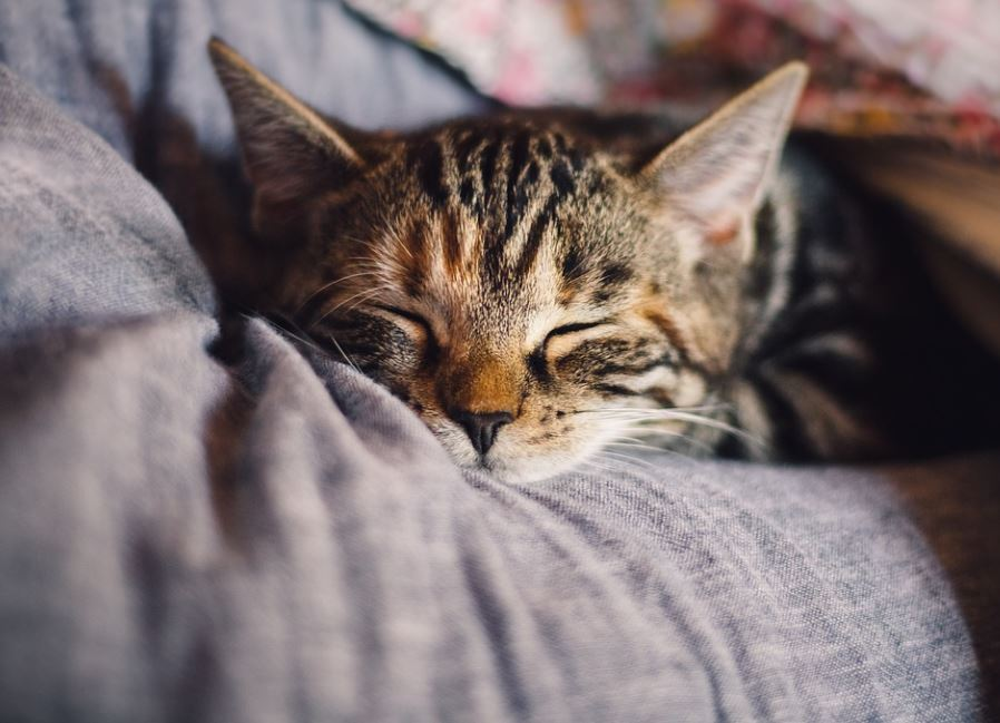 things cats hate to walk on, top 3 things cats hate, things cats are scared of, what do cats hate to keep them away