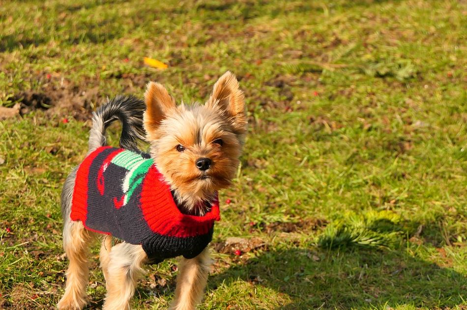 things to do with a puppy in the winter, dog-friendly winter activities, winter activities for dogs, what to do with my dog in winter, outdoor winter activities for dogs, what to do with your dog on a cold day.